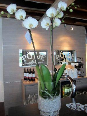 Pötje Design Bar/Design Bar bij Ploemen Interieur